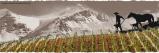 El vino en AméricaLatina