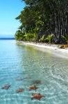 Playa de las Estrellas, Archipiélago de Bocas del Toro, Panama